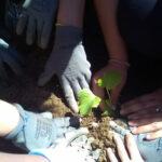 finaliza-taller-agricultura-ecologica-huelva-fundacion-Cepaim